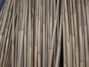 Bamboo Aids Haitian Earthquake Victims